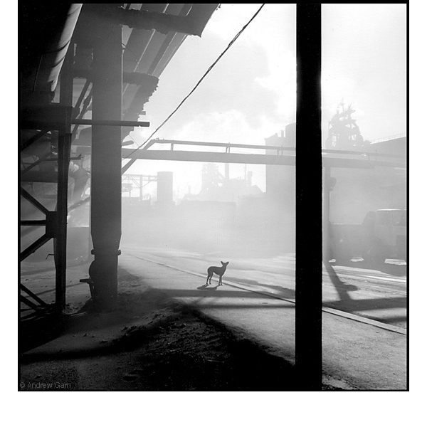 Dog in Coke Dust, MMK Steel Works, Siberia
